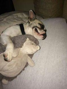 Jamais sans mon Doudou... ...Sleeping French Bulldog.