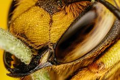 European Wool Carder Bee VII by dalantech. @go4fotos