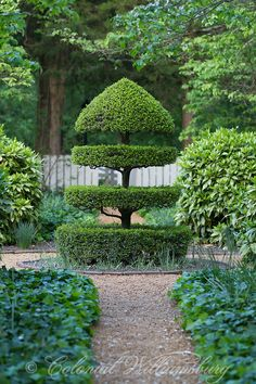 Beautiful Garden Topiary / repinned on toby designs