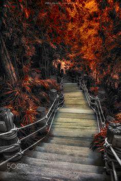 Popular on 500px : Fairytale path by manjik