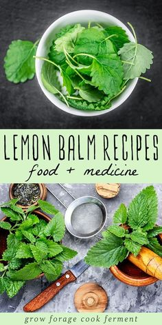 Lemon Balm Recipes: food, drinks, remedies, + more! Got lemon balm? Here are over 30 delicious lemon balm recipes to help you use all of this edible and medicinal herb growing in your yard! Lemon Balm Recipes, Herb Recipes, Drink Recipes, Lemon Balm Uses, Salve Recipes, Cold Home Remedies, Herbal Remedies, Health Remedies, Healing Herbs
