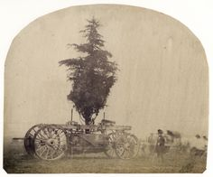 Transporting a Tree on a Wagon for gardens built for the 1862 International Exhibition in South Kensington, London