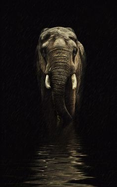 "An Elephant: ""Through The Storm..."" (Photo By: knipser62 on 500px.)"