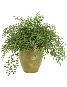 Smilax Wreathed with Honeysuckle Vines Floor Plant in Pot
