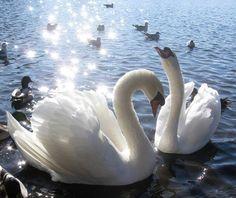 oh my ..... beautiful birds