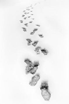 """""""Footsteps in Snow"""" - Black & white fine art print - Footsteps frozen in the snow.  This picture of footsteps frozen in the snow was taken near Greensboro North Carolina during a Christmas day snow storm."""