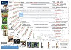 Evrim Ağacı | Bir Bakışta Yaşayan ve Soyu Tükenmiş Akrabalarımıza Örnekler ve Taksonomik İlişkimiz