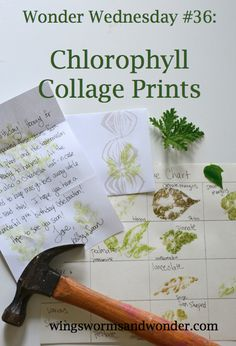 Wonder Wednesday Chlorophyll Collage Prints - Wings, Worms and Wonder, Forest School Activities, Nature Activities, Science Activities, Teaching Science, Photosynthesis Activities, Outdoor Education, Outdoor Learning, Early Education, Outdoor Classroom
