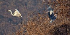 Changing Places, Egret and Heron by Mathew Schwartz on 500px