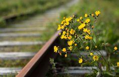 ~Ranveig Marie~ Runaway Train, Wild Girl, Summertime, Life, Boho, Beautiful, Girls, Style, Paths