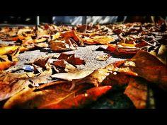 456 - Folhas de outono fora da estação #umafotopordia #picoftheday #brasil #brazil #n8 #snapseed #pixlromatic+