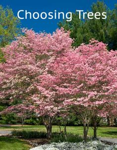 Having trouble deciding on trees? Here is a guide to help you with all trees...ornamental, shade and evergreen trees. http://www.landscape-design-advice.com/how-to-landscape-with-trees.html