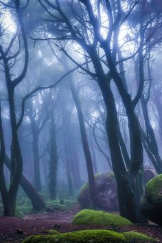 Peninha Magical Forrest, in Sintra, Portugal - omg this is so pretty I wonder if you could camp there coz that would be awesome!!