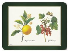 """Jason Redoute Fruit Placemats - Set of 4 (Large) by Jason. $39.85. Hardboard, Cork backed. Size: 17"""" x 11.5"""". Gift Boxed. Heat resistant to 225ºF. Durable, heat sealed surface. Attractive top quality placemats by Jason of New Zealand. The hardboard and cork is sourced from renewable resources. The edges are heat sealed, the surface is smooth and the cork backing will protect your table. Just wipe clean with a damp cloth."""