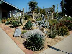Drought tolerant garden on Pinterest Drought Tolerant