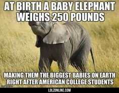 Baby Elephants #lol
