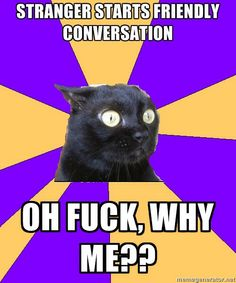 Anxiety Cat is not a fan of conversing with strangers.