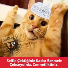 Selfi…