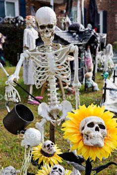 Halloween Yard Displays, Skeleton Photo, Bizarre Photos, Halloween Coffin, Human Skeleton, Photo Illustration, Sunflowers, Royalty Free Images, Scary