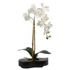 pots de plantes d 39 int rieur sur pinterest planters pots de fleurs d 39 ext rieur et jardini res. Black Bedroom Furniture Sets. Home Design Ideas