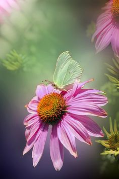 Free Pictures, Free Images, Insect Wings, Insects, Butterfly, Floral, Nature, Florals, Naturaleza