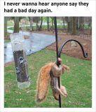 funny squirrel stuck