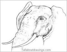 Beginner artists will find this selection of wildlife pencil drawings easy to create due to their simplicity and lots of white space. Pencil Drawings Of Animals, Love Drawings, Easy Drawings, Elephant Drawings, Africa Drawing, Animal Outline, Sketch Painting, Art Projects, Project Ideas