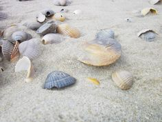 shell-602226_1280