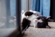 Cool Cats – Preventing Cats Overheating in the Heatwave - Katzenworld Cool Cats, Cat Roll, Gatos Cool, Cat In Heat, Dog Died, Pet Dander, Outdoor Cats, All About Cats, Mundo Animal