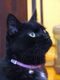 Black cat Virgil - Waiting
