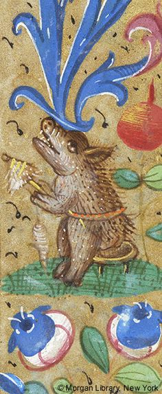 Spinning pig. Medieval Manuscript Images, Pierpont Morgan Library, Book of hours (MS M.6). MS M.6 fol. 79r