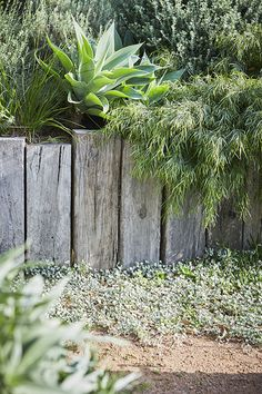 What You Can Do To Improve Your Landscaping using Garden Arbor Everyone that owns a home wants to take pride in it. Seaside Garden, Coastal Gardens, Beach Gardens, Tropical Garden, Australian Garden Design, Australian Native Garden, House Landscape, Landscape Design, Common Garden Plants