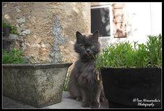 Beaumont, Drome, France > Never disturb a cat while it cleans itself...