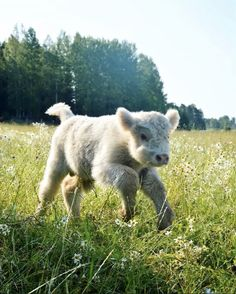 Things that make you go AWW! Like puppies, bunnies, babies, and so on. A place for really cute pictures and videos! Cute Baby Cow, Baby Cows, Cute Cows, Cute Babies, Baby Elephants, Cute Creatures, Beautiful Creatures, Animals Beautiful, Farm Animals
