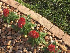 67 Favourite Spring Garden Decoration Ideas For Backyard & Front Yard - comadecor Brick Garden Edging, Lawn Edging, Landscape Bricks, Landscape Edging, Landscape Steps, Shed Landscaping, Landscaping With Rocks, Landscaping Design, Florida Landscaping
