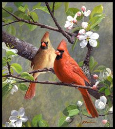 Decoys and Wildlife Gallery Web site - Frenchtown, NJ 08825 Bird Painting Acrylic, Watercolor Bird, Pretty Birds, Beautiful Birds, Red Bird Tattoos, Cardinal Bird Tattoos, Animal Paintings, Cardinal Paintings, Art Paintings