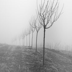 trees and fog IV - null