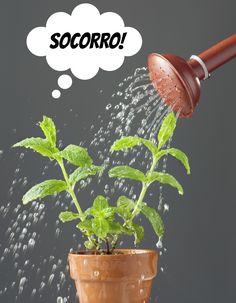 Conheça neste artigo os 5 erros mais comuns dos iniciantes no cultivo de plantas. Com certeza você cometeu ou ainda comete algum deles.