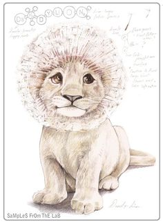 "Dandylion/Lion = Dandylion - Mixing vegetables and animals illustration series ""Samples from the Lab"" by Rob Foote, South Africa."