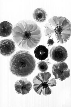 Flower Bed - betty & frank