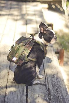 We <3 Herschel Bags Get the perfect outfit to compliment your backpack at www.amongthefirst.co.uk #DoggyStyle #MensFashion