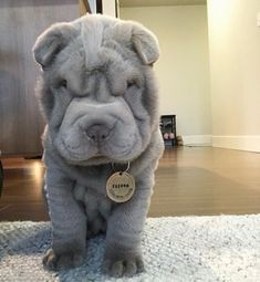 Cute Funny Animals, Funny Cute, House Hippo, Fluffy Cows, Super Cute Dogs, Dog Rates, We Rate Dogs, Cute Dogs And Puppies, Beautiful Dogs
