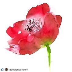 Watercolor poppy illustration by Marta Spendowska