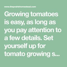 Growing tomatoes is easy, as long as you pay attention to a few details. Set yourself up for tomato growing success with these tips! Garden Fun, Garden Care, Garden Tips, Tips For Growing Tomatoes, Pay Attention, Amazing Gardens, Harvest, Success, Gardening