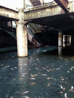 New World Mall, abandoned mall...and fish tenants - Bangkok