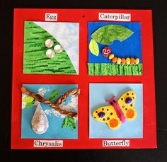 """that artist woman: """"Lifecycle of the Butterfly"""" Inchies - Schmetterling Fair Projects, Science Projects, School Projects, Projects For Kids, Crafts For Kids, Butterfly Project, Butterfly Crafts, Chenille Affamée, Life Cycle Craft"""