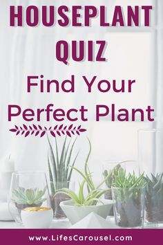 Not sure which type of houseplant to get? Take this houseplant quiz to find your PERFECT match! Answer these easy questions to find the right plant for you! Indoor Plants, Indoor Gardening, Potted Plants, Growing Vegetables Indoors, Types Of Houseplants, Easy Plants To Grow, Low Light Plants, Mosquito Repelling Plants, Perfect Plants