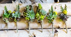 No twine. Green Boutonniere, Mens Boutonniere, Succulent Boutonniere, Boutonnieres, Wedding Flower Design, Wedding Flowers, Last Minute Wedding, Floral Backdrop, Groom And Groomsmen