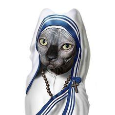 la dama de calcuta-gato