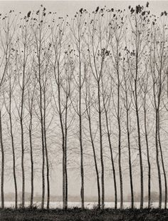 "yama-bato: "" Domenico Foschi Poplars-filtered http://www.dfoschisite.com """
